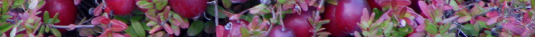 Willows Cranberries